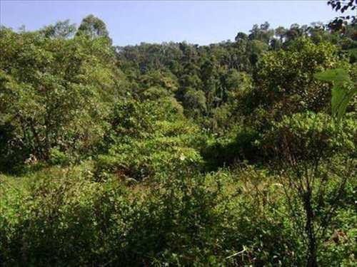 Terreno Comercial, código 4326 em Itanhaém, bairro Rio Preto
