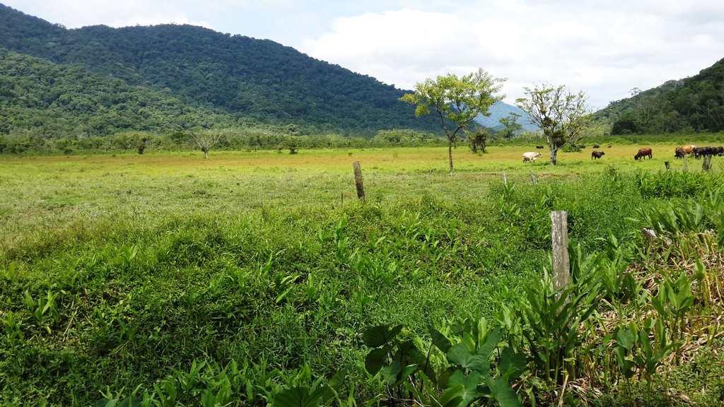 Fazenda em Itanhaém, no bairro Jardim Mambu