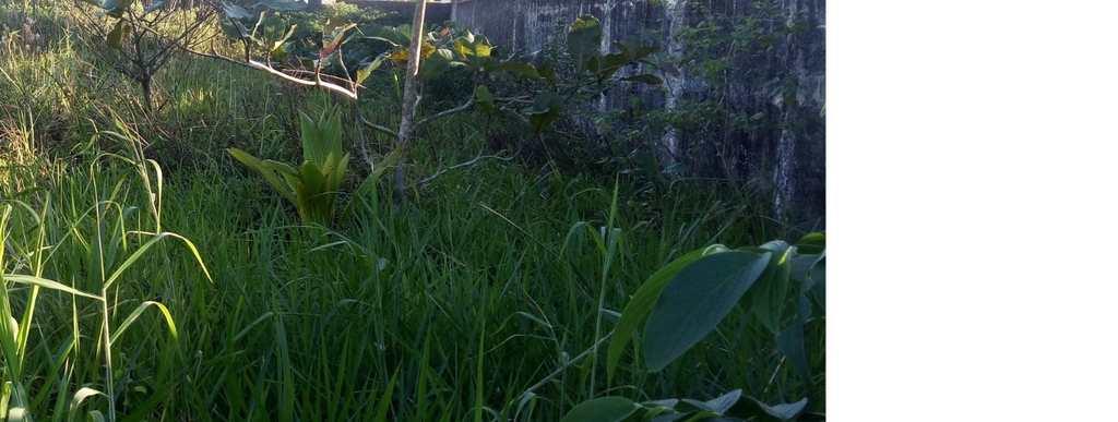 Terreno em Itanhaém, no bairro Jardim S Fernando