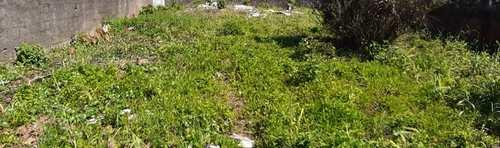 Terreno, código 5529 em Itanhaém, bairro Raul Cury