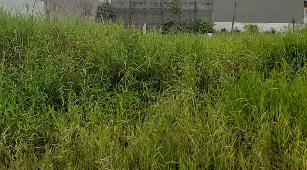 Terreno em Itanhaém, no bairro Jardim Grandesp