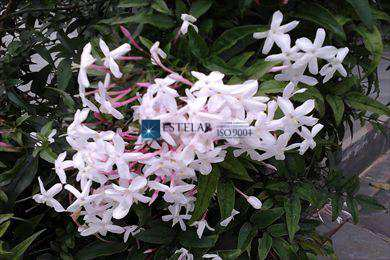 Sítio, código 5243 em Mogi das Cruzes, bairro Volta Fria