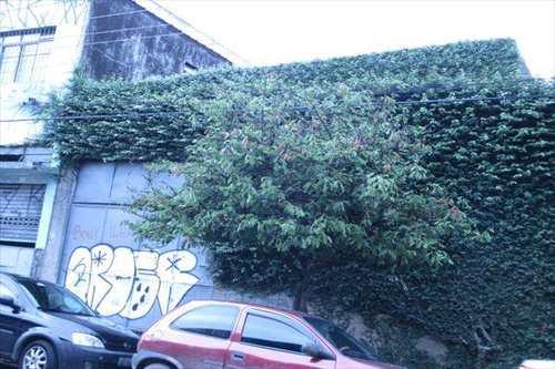 Galpão, código 2980 em São Paulo, bairro Mooca