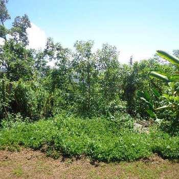 Terreno de Condomínio em Ubatuba, bairro Ponta das Toninhas