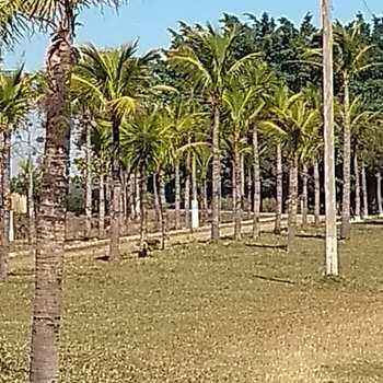 Sítio em Araras, bairro Campo Novo