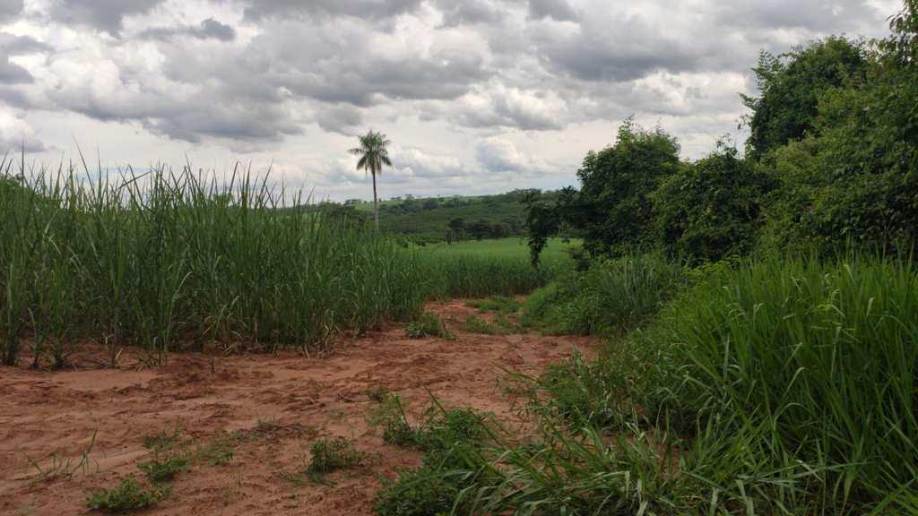 Sítio em Barretos, no bairro Área Rural de Barretos