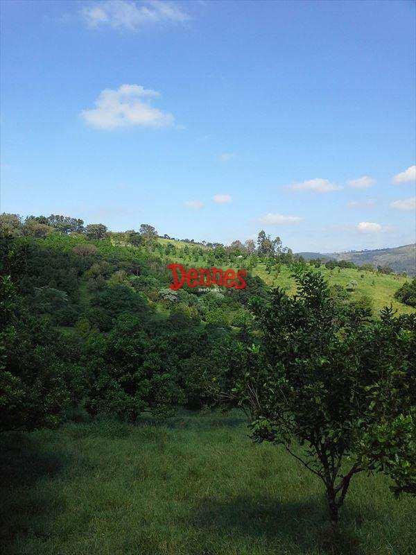 Fazenda em Amparo, bairro Silvestre