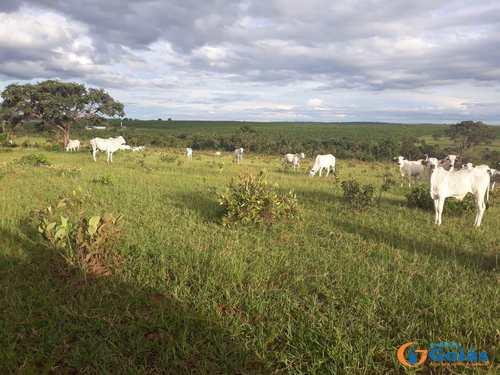 Fazenda, código 8933 em Cassilândia, bairro Area Rural