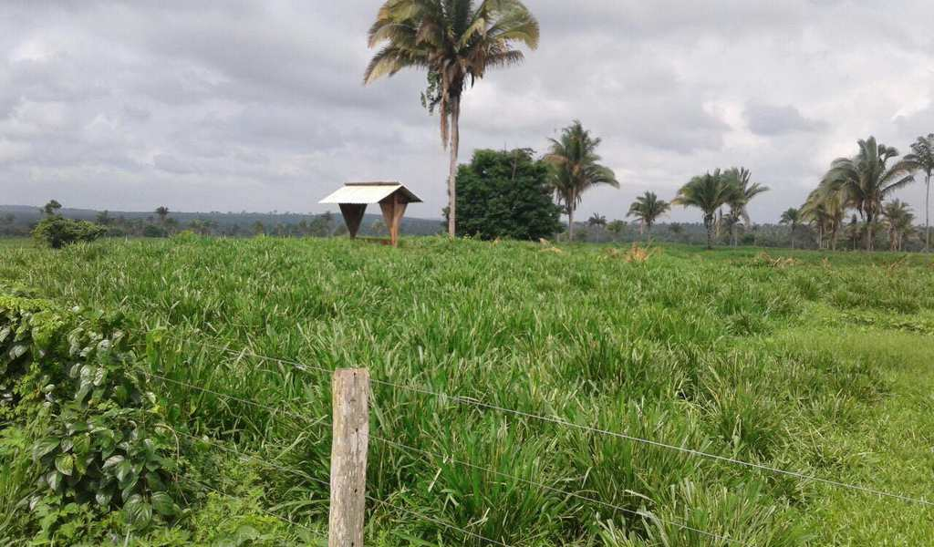 Fazenda em Cachoeirinha, bairro Setor Central