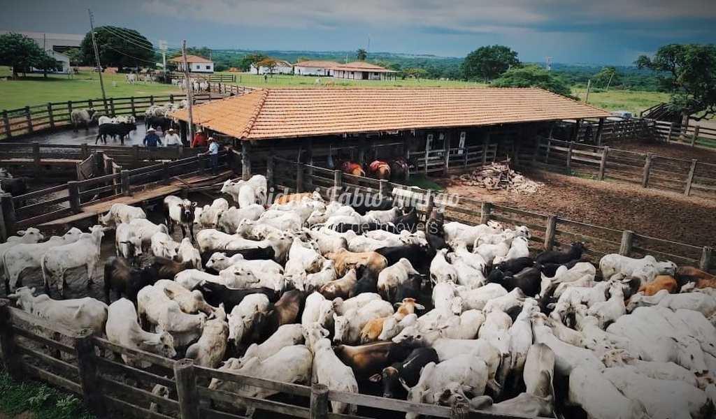 Fazenda em Lins, bairro Área Rural de Lins