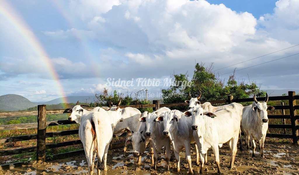 Fazenda em Araçatuba, no bairro Área Rural de Araçatuba