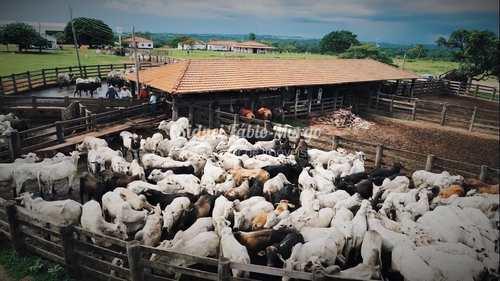 Fazenda, código 155 em Indaiá do Aguapeí, bairro Área Rural de Indaiá do Aguapeí