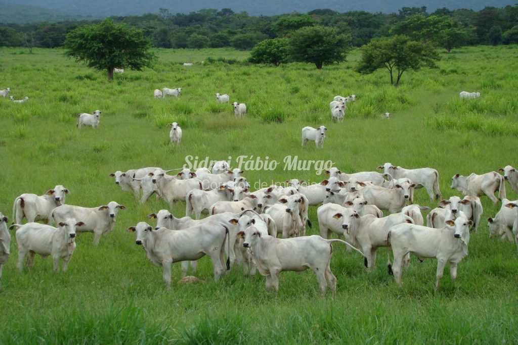 Fazenda em Osvaldo Cruz, no bairro Área Rural