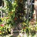 Chácara em Cotia, bairro Pinus Park