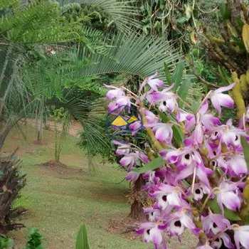 Sítio em Embu-Guaçu, bairro Parque Itararé