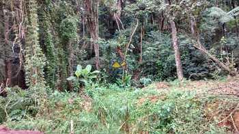 Terreno Rural, código 50 em Itapecerica da Serra, bairro Jardim Santa Isabel