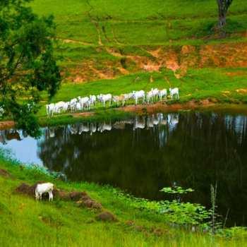 Fazenda em Itapetininga, bairro Área Rural de Itapetininga