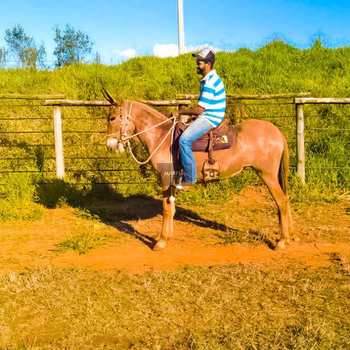 Fazenda em Santo Antônio de Posse, bairro Área Rural de Santo Antônio de Posse