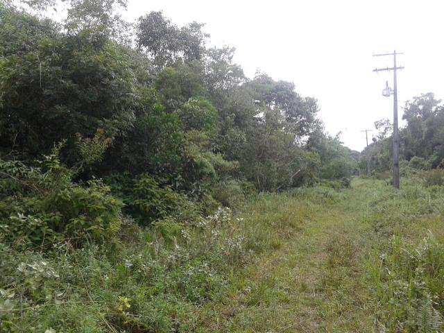 Loteamento, Rural, Itanhaém - R$ 40 mil, Cod: 5220