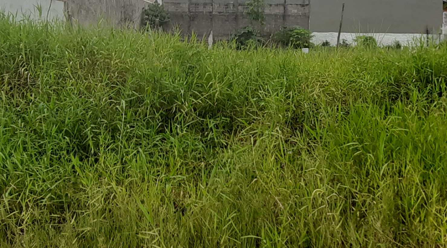 Terreno, Jardim Grandesp, Itanhaém - R$ 130 mil, Cod: 5606
