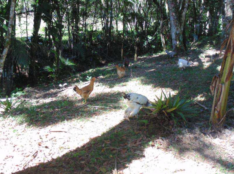 Fazenda, Centro, Juquitiba - R$ 1.200.000,00, 628.265.710m² - Codigo: 2892