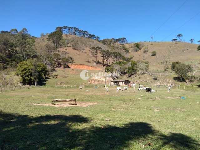 Sítio, Lajeado, Santo Antônio do Pinhal - R$ 850 mil, Cod: 666