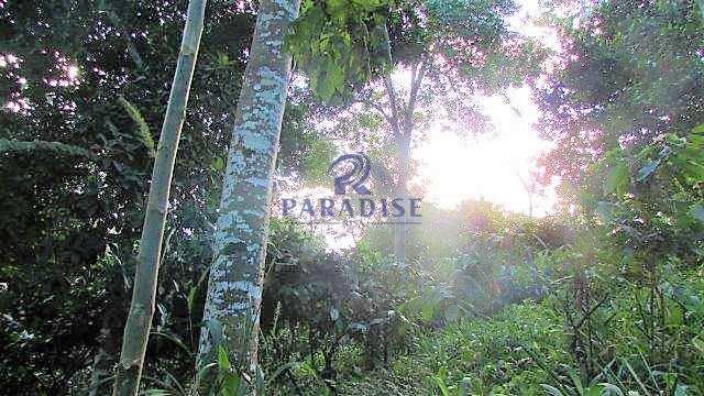 Fazenda em Itabuna, frente para BR 101-160 ha- R$ 10.000.000,00