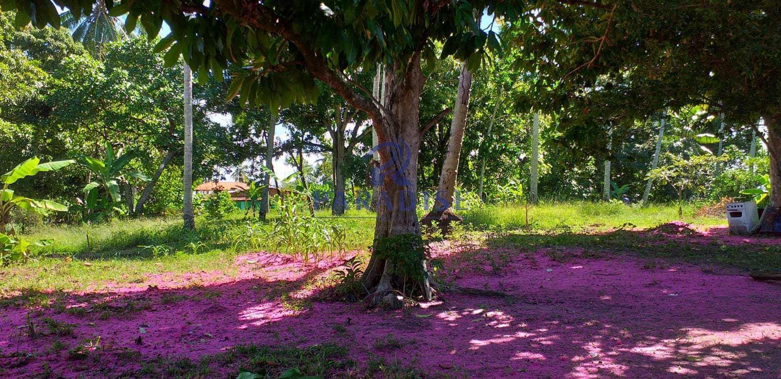 Sítio em Monte Gordo-Camaçari- Bahia  - R$ 250 mil, Cod: 68418