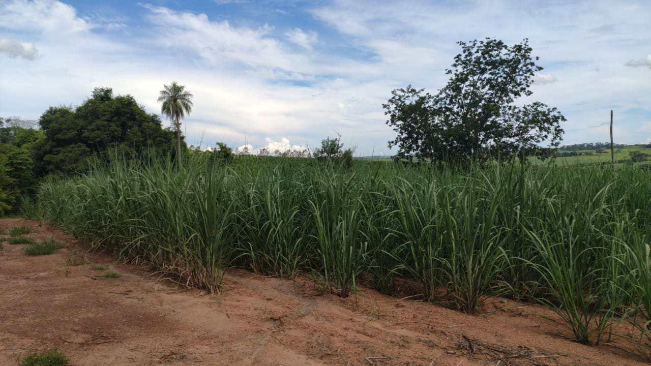 Sítio, Área Rural de Barretos, Barretos - R$ 1.41 mi, Cod: 2