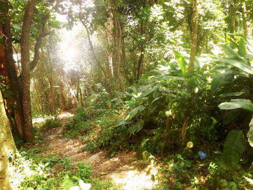 19 bosque