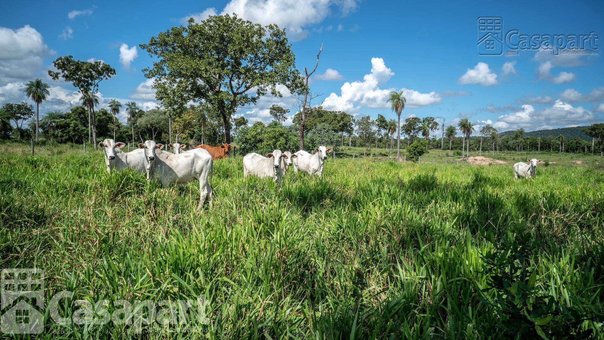 Fazenda com 4 dorms, Centro, Porto Murtinho - R$ 16 mi, Cod: 481