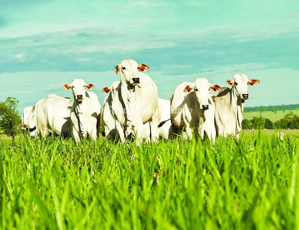 Fazenda com 3 dorms, Área Rural de Araçatuba, Araçatuba - R$ 13.2 mi, Cod: 153