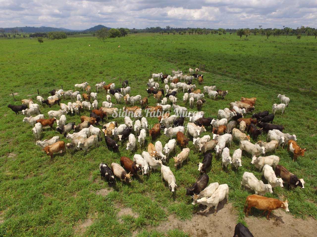 Sítio, Área Rural, Osvaldo Cruz - R$ 4 mi, Cod: 188