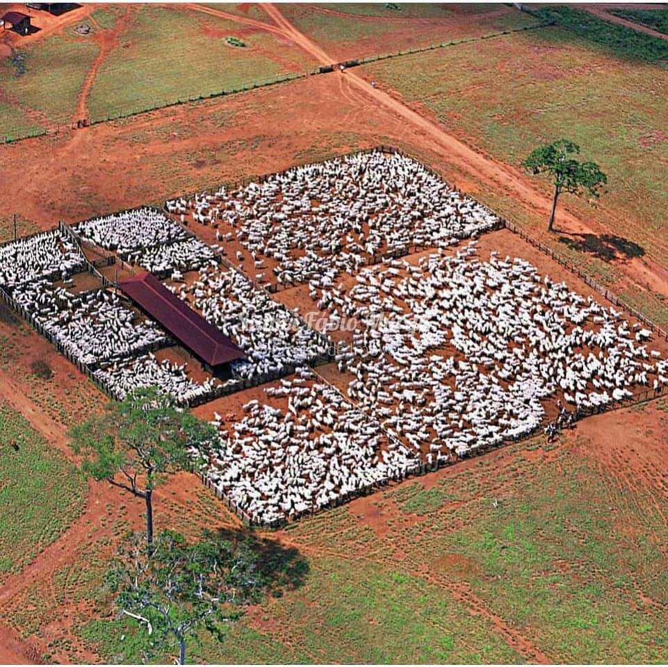 Fazenda, Área Rural, Osvaldo Cruz - R$ 12.5 mi, Cod: 205