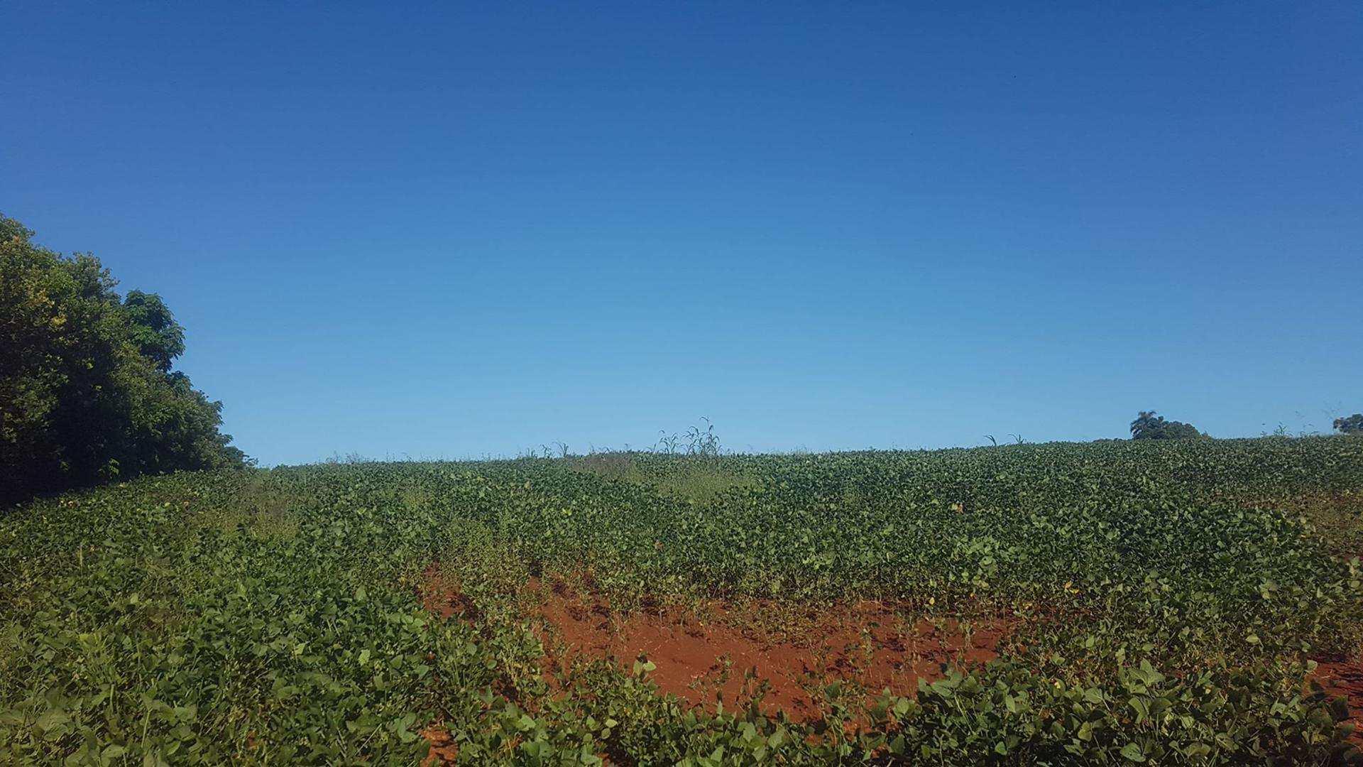 Chácara, Linha Salvador, Santa Rosa - R$ 200 mil, Cod: 129