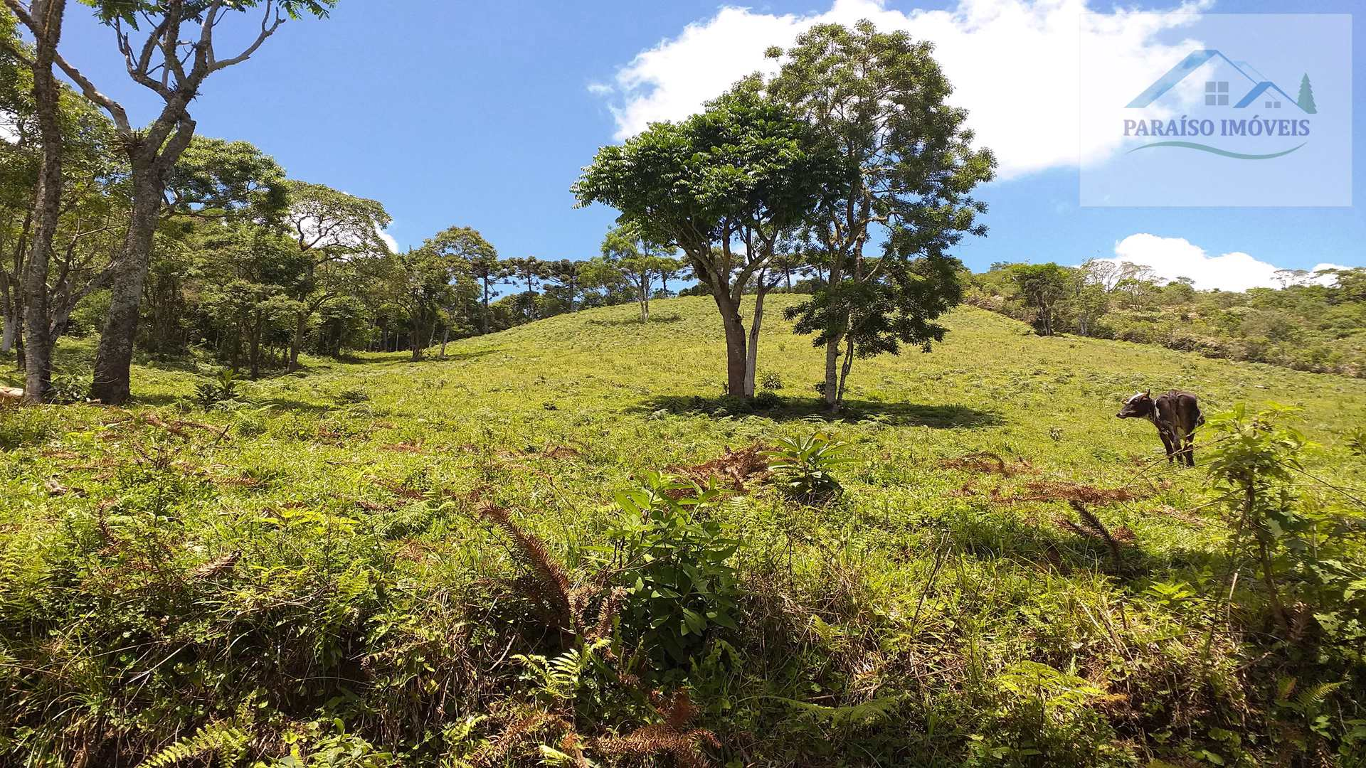 Lindo Terreno Rural em Gonçalves - Sul de Minas